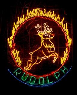 Reindeer Rudolph 2013