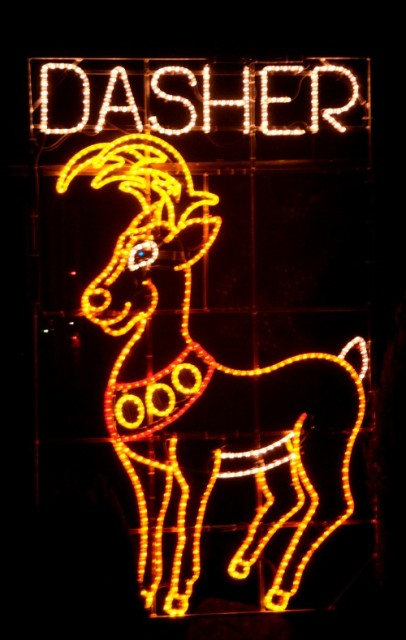 Reindeer Dasher 2013